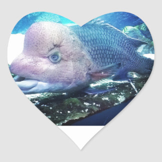 Flowerhorn Cichlid Fish Heart Sticker