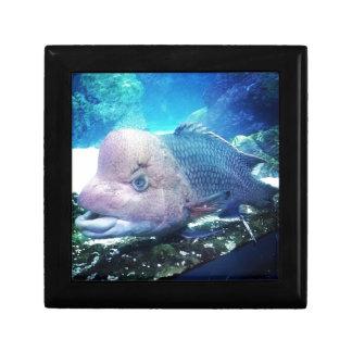 Flowerhorn Cichlid Fish Keepsake Box