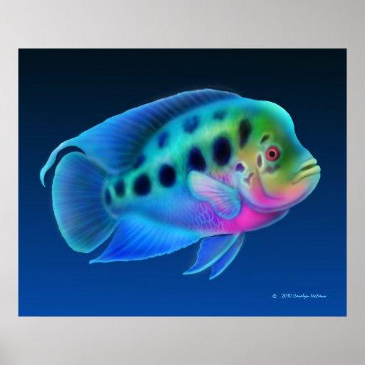 Flowerhorn Cichlid Fish Print