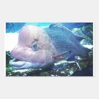 Flowerhorn Cichlid Fish Rectangular Sticker
