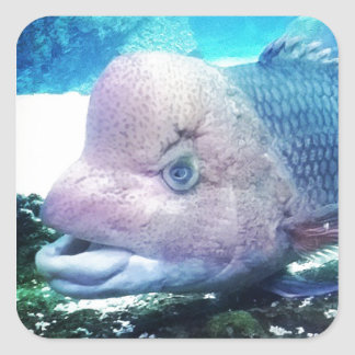 Flowerhorn Cichlid Fish Square Sticker