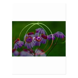 FlowerImplosion 5 Postcard