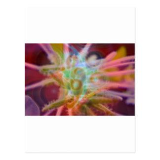 FlowerImplosion 6 Tarjetas Postales