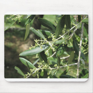 Flowering and fruit set in olive Oleaceae family Mouse Pad