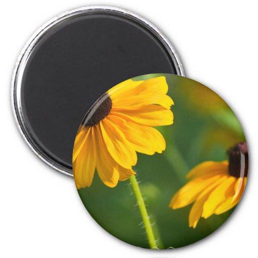 Flowering Black Eyed Susans Magnet Fridge Magnet