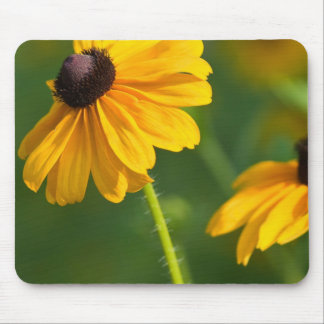 Flowering Black Eyed Susans Mouse Pad
