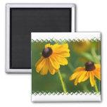 Flowering Black Eyed Susans Square Magnet Fridge Magnet