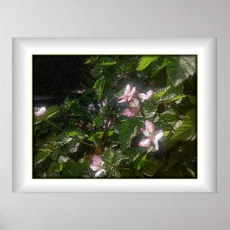 Flowering Blackberry Vines Poster