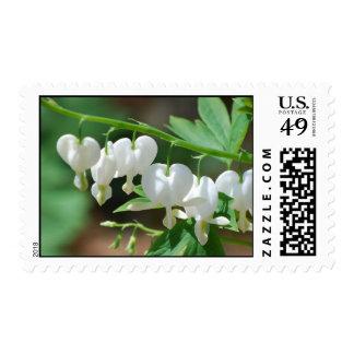 Flowering Bleeding Heart Postage Stamp