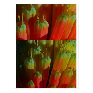 Flowering BUDS : Cactus Wild :  Greetings,Goodluck Postcard