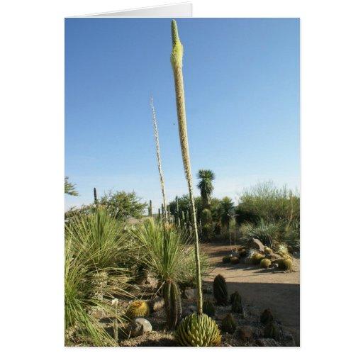 Flowering Cactus at El Charco del Ingenio Cards