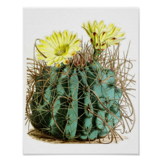 Flowering Cactus No5 Vintage Natural History Print