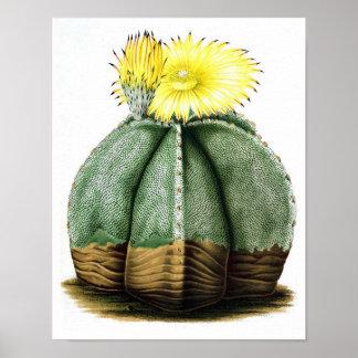 Flowering Cactus No7 Vintage Natural History Print