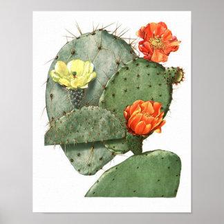 Flowering Cactus No9 Vintage Natural History Print