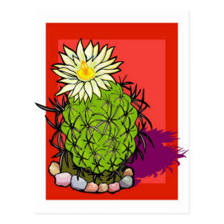 Flowering Cactus Postcard
