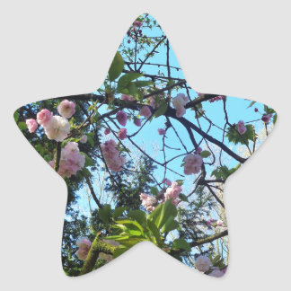 Flowering Cherry, Blossom, Nature, Pink Flower Star Sticker