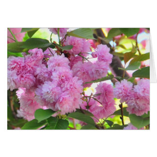 Flowering Cherry Tree Teacher Appreciation Card