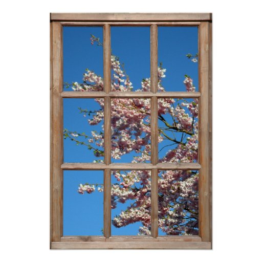 Flowering Cherry Tree View from a Window Poster