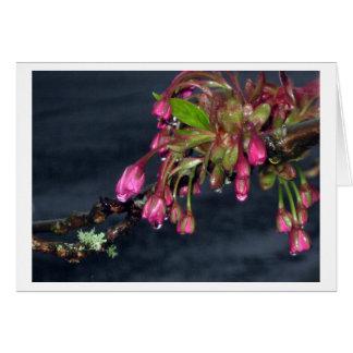 Flowering Cherry Trees Card