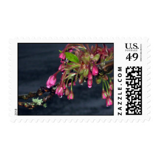 Flowering Cherry Trees Stamp