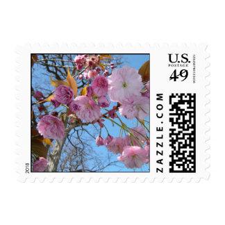 Flowering Cherryblossom Tree Postage