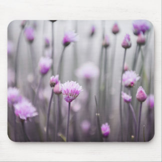 Flowering chives III Mouse Pad