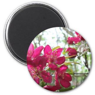 Flowering Crab Apple Tree Magnet
