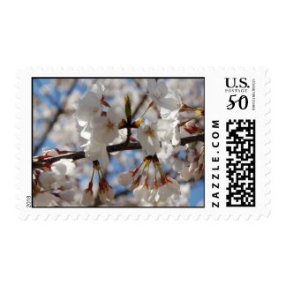 Flowering Crabapple Blossoms Postage