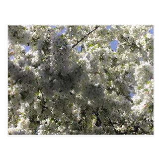 Flowering Crabapple Tree Postcard