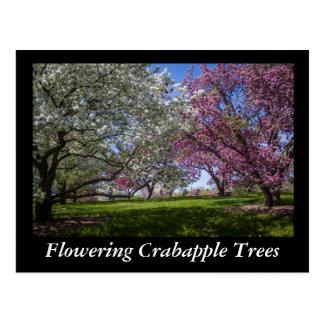 Flowering Crabapple Trees Postcard