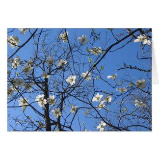 Flowering Dogwood Card