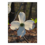Flowering Dogwood Cards