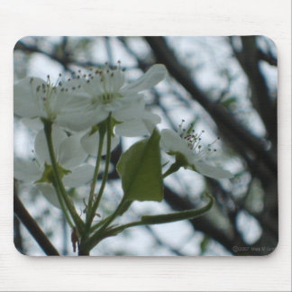 Flowering Dogwood Mousepad