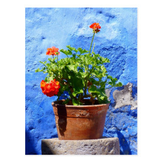 Flowering geraniums against a blue wall post cards