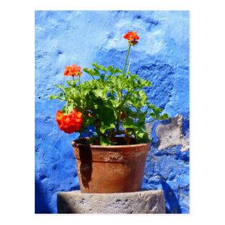 Flowering geraniums against a blue wall postcard