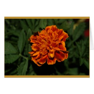 Flowering Gold card