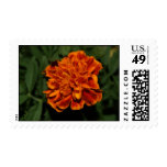 Flowering Gold Postage Stamps