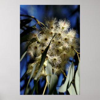 Flowering Gum Tree Print
