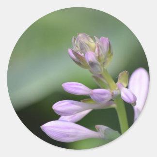Flowering Hosta Classic Round Sticker
