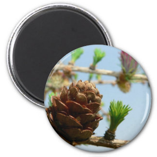 Flowering Larch Close Up Fridge Magnets