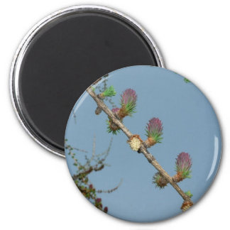 Flowering Larch On Tree Refrigerator Magnet