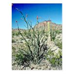 Flowering Ocotillo, Butte Behind Postcard
