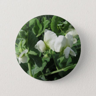 Flowering peas plant in a field . Tuscany, Italy Pinback Button