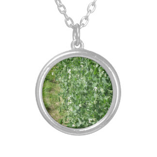 Flowering peas plant in a field . Tuscany, Italy Silver Plated Necklace