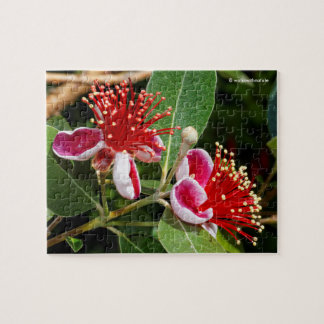 Flowering Pineapple Guava / Guavasteen Jigsaw Puzzle