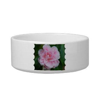Flowering Pink Camelia Bowl