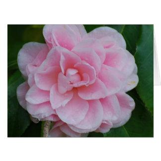 Flowering Pink Camelia Card