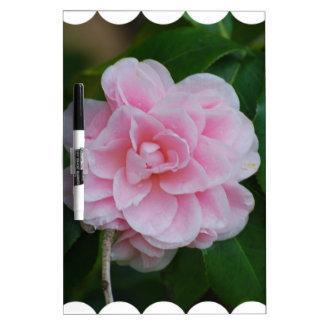 Flowering Pink Camelia Dry-Erase Board