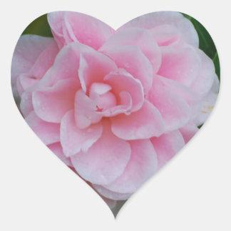 Flowering Pink Camelia Heart Sticker