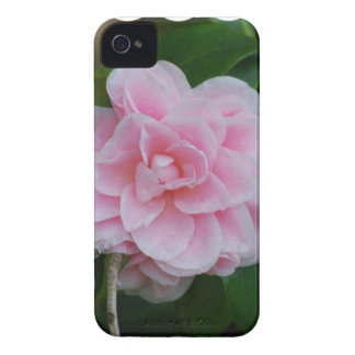 Flowering Pink Camelia iPhone 4 Case-Mate Case